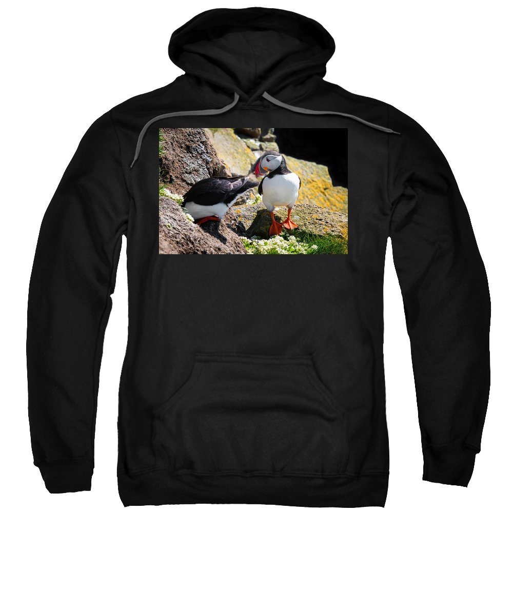 Puffin Sweatshirt featuring the photograph Cute Puffin Couple In Iceland Latrabjarg by Matthias Hauser
