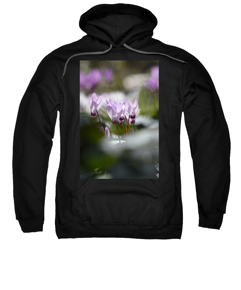 Cyclamen At Lachish 1 Sweatshirt featuring the photograph Cyclamen At Lachish 1 by Dubi Roman