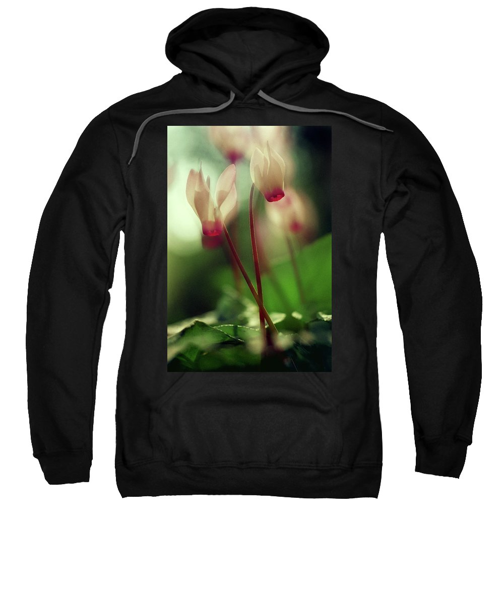 Impressionistic Sweatshirt featuring the photograph Cyclamens by Dubi Roman