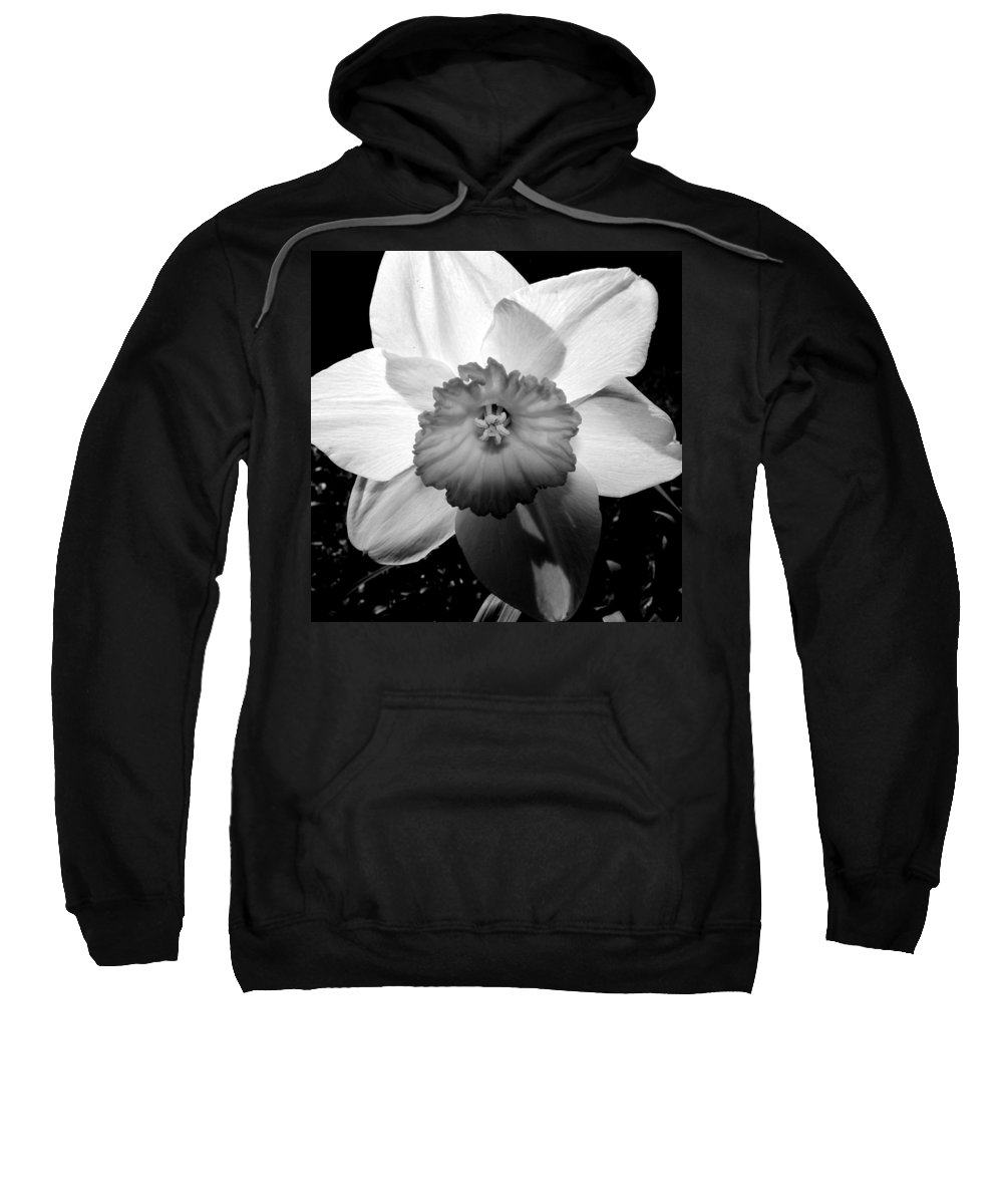 Daffodil Sweatshirt featuring the photograph Daffodil In Springtime by Michelle Calkins
