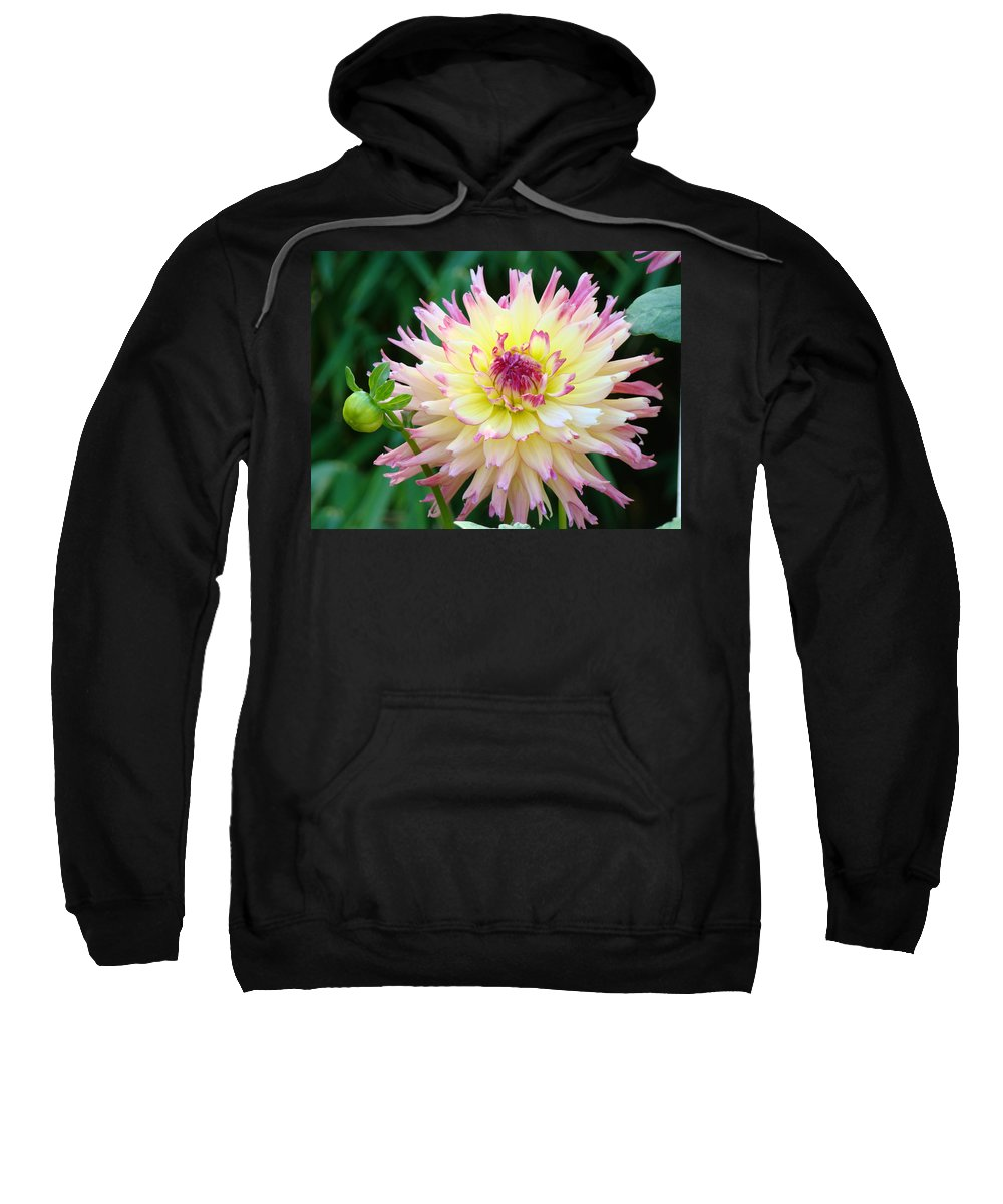 Flowers Sweatshirt featuring the photograph Dahlia Floral Pink Yellow Flower Garden Baslee Troutman by Baslee Troutman