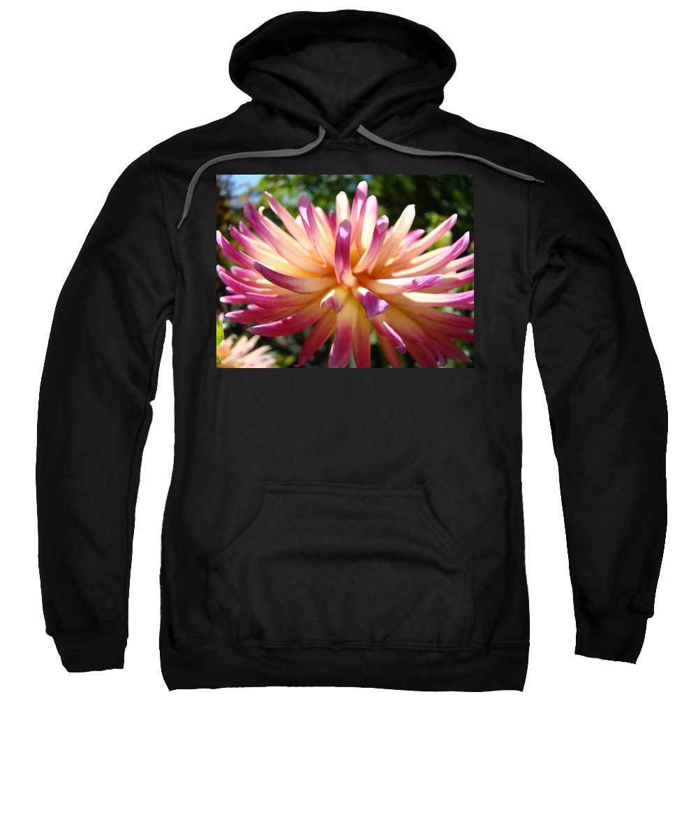 Dahlia Sweatshirt featuring the photograph Dahlia Flowers Art Pink Purple Dahlias Giclee Baslee Troutman by Baslee Troutman