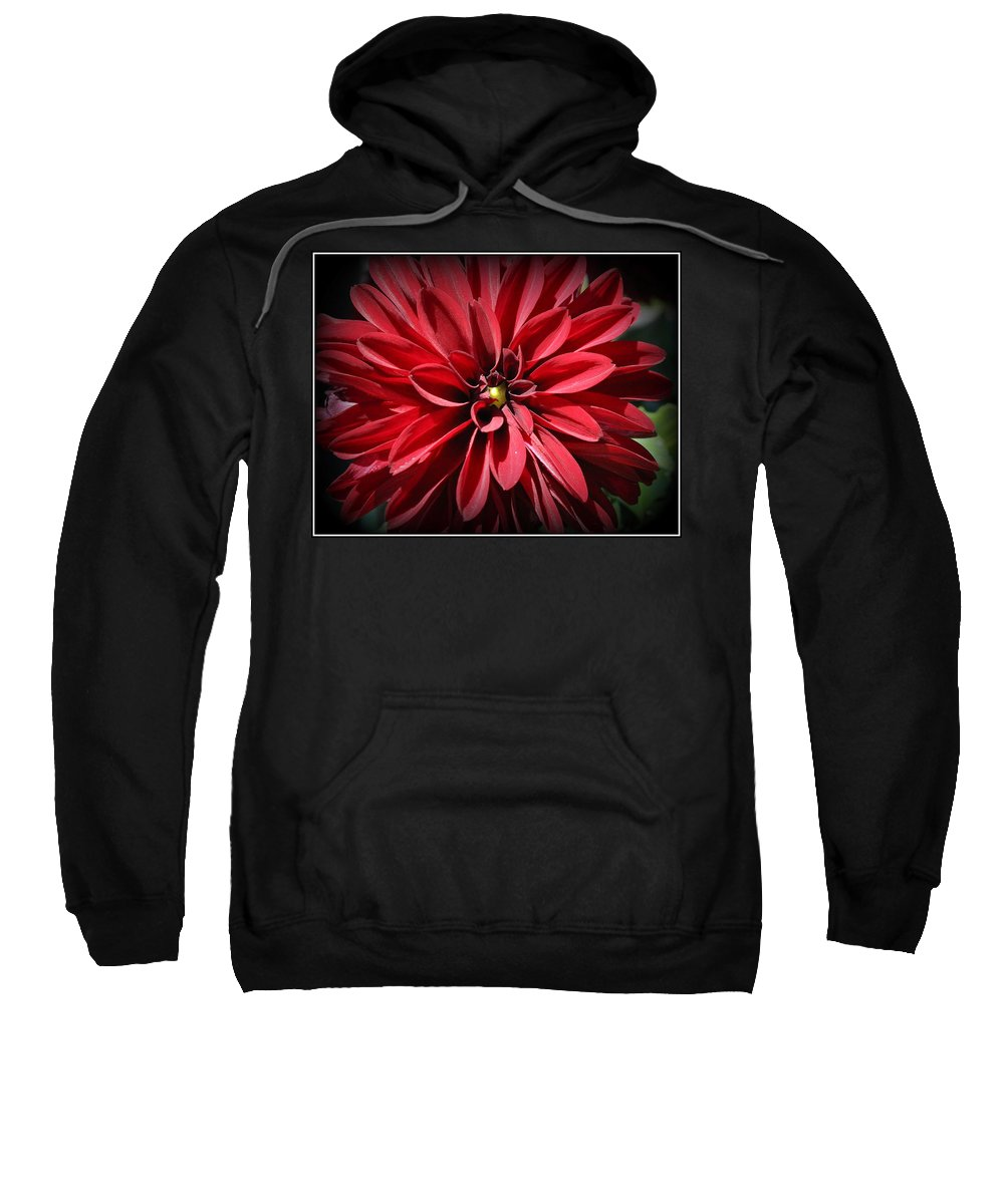 Dahlia Sweatshirt featuring the photograph Dahlia Radiant In Red by Dora Sofia Caputo Photographic Design and Fine Art