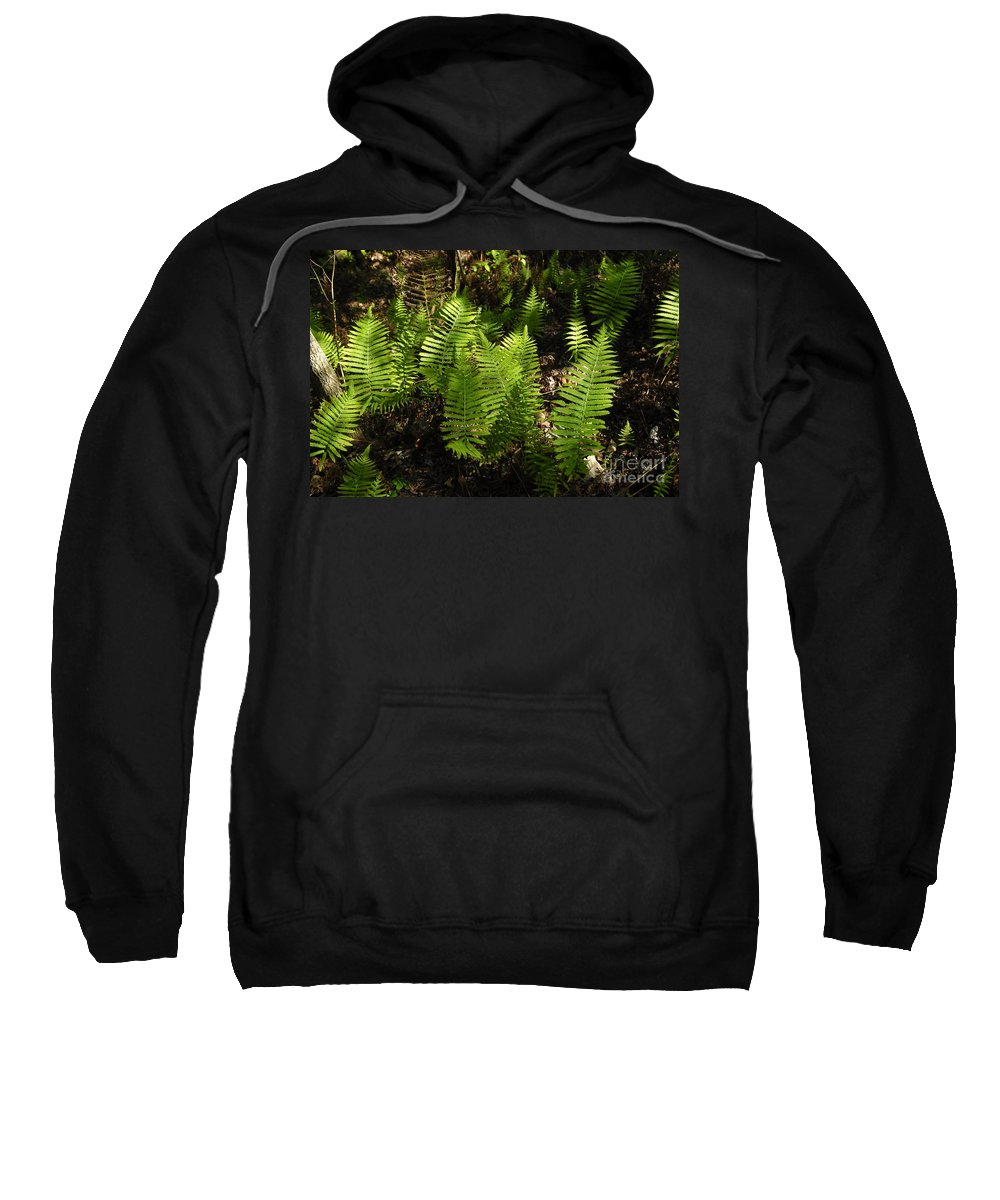 Ferns Sweatshirt featuring the photograph Dancing Ferns by David Lee Thompson
