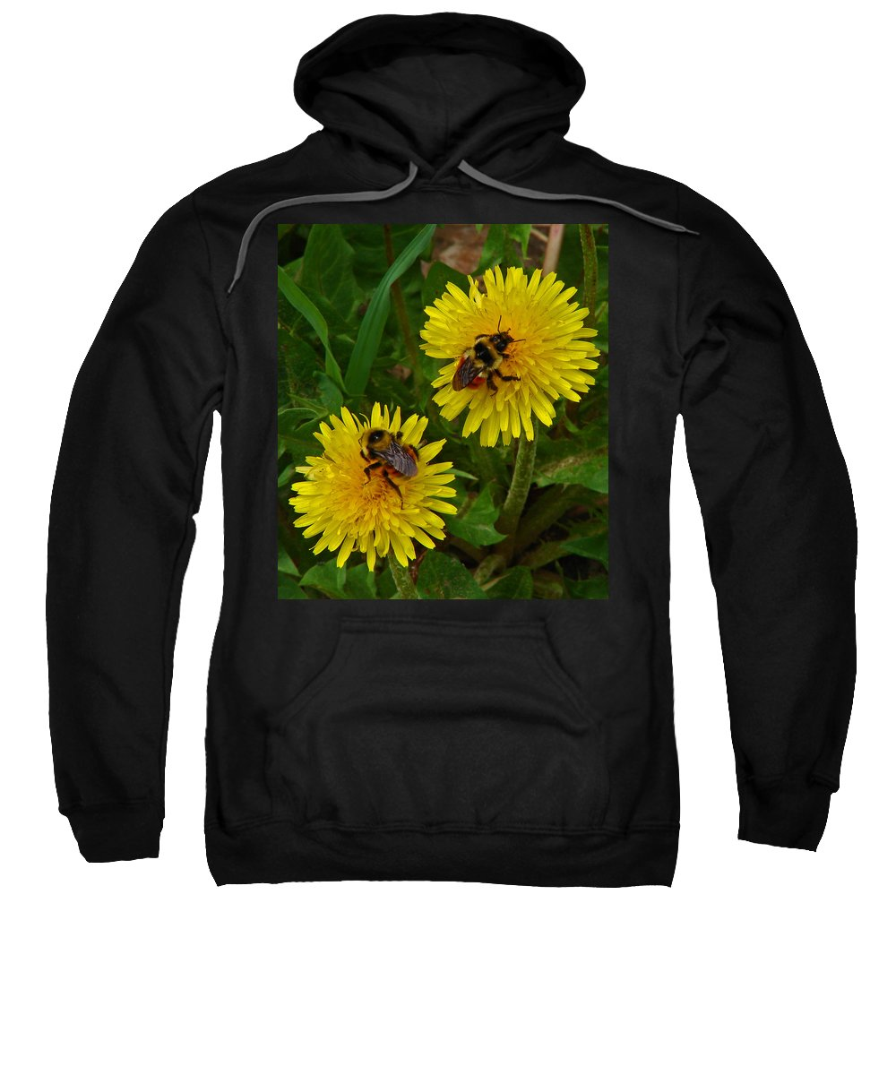 Dandelion Sweatshirt featuring the photograph Dandelions And Bees by Heather Coen