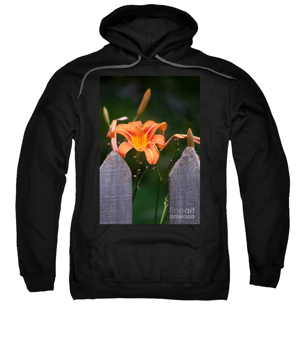 Digital Photograph Sweatshirt featuring the photograph Day Lilly Fenced In by David Lane