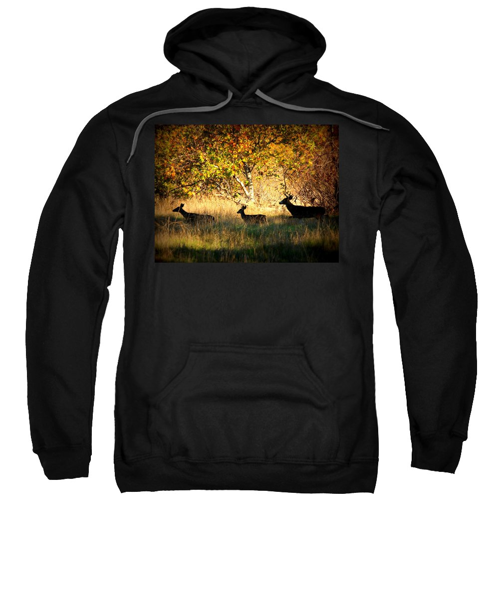 Landscape Sweatshirt featuring the photograph Deer Family In Sycamore Park by Carol Groenen