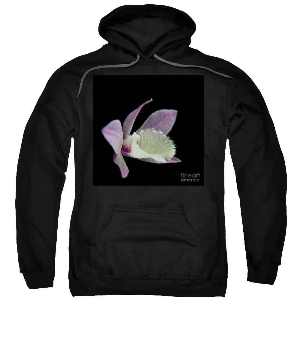 Orchids Sweatshirt featuring the photograph Dendrobium Orchid by MingTa Li