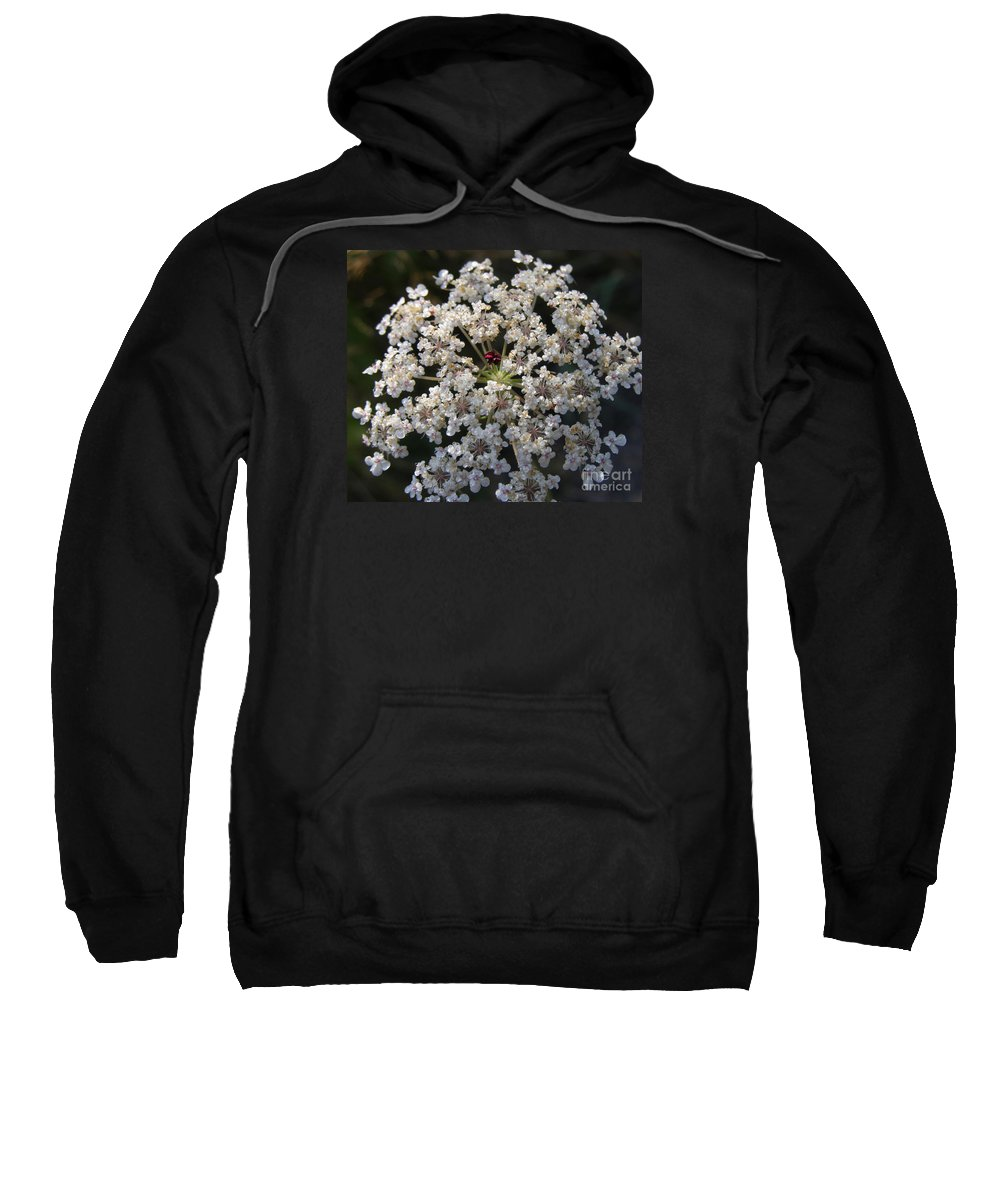 Wildflowers Sweatshirt featuring the photograph Dew On Queen Annes Lace by Lynn Quinn