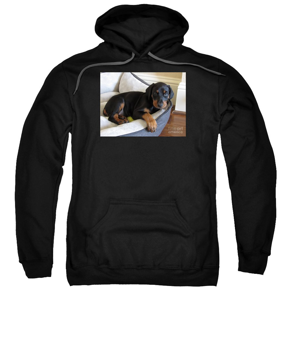 Dog Sweatshirt featuring the photograph Doberman Puppy by Jennifer Matthew