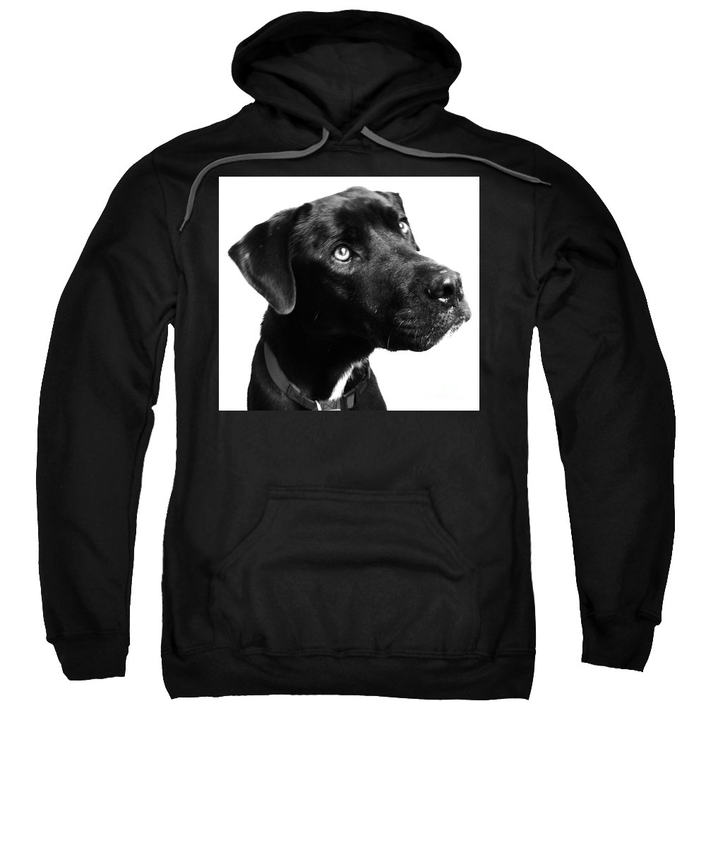 Dogs Sweatshirt featuring the photograph Dog by Amanda Barcon