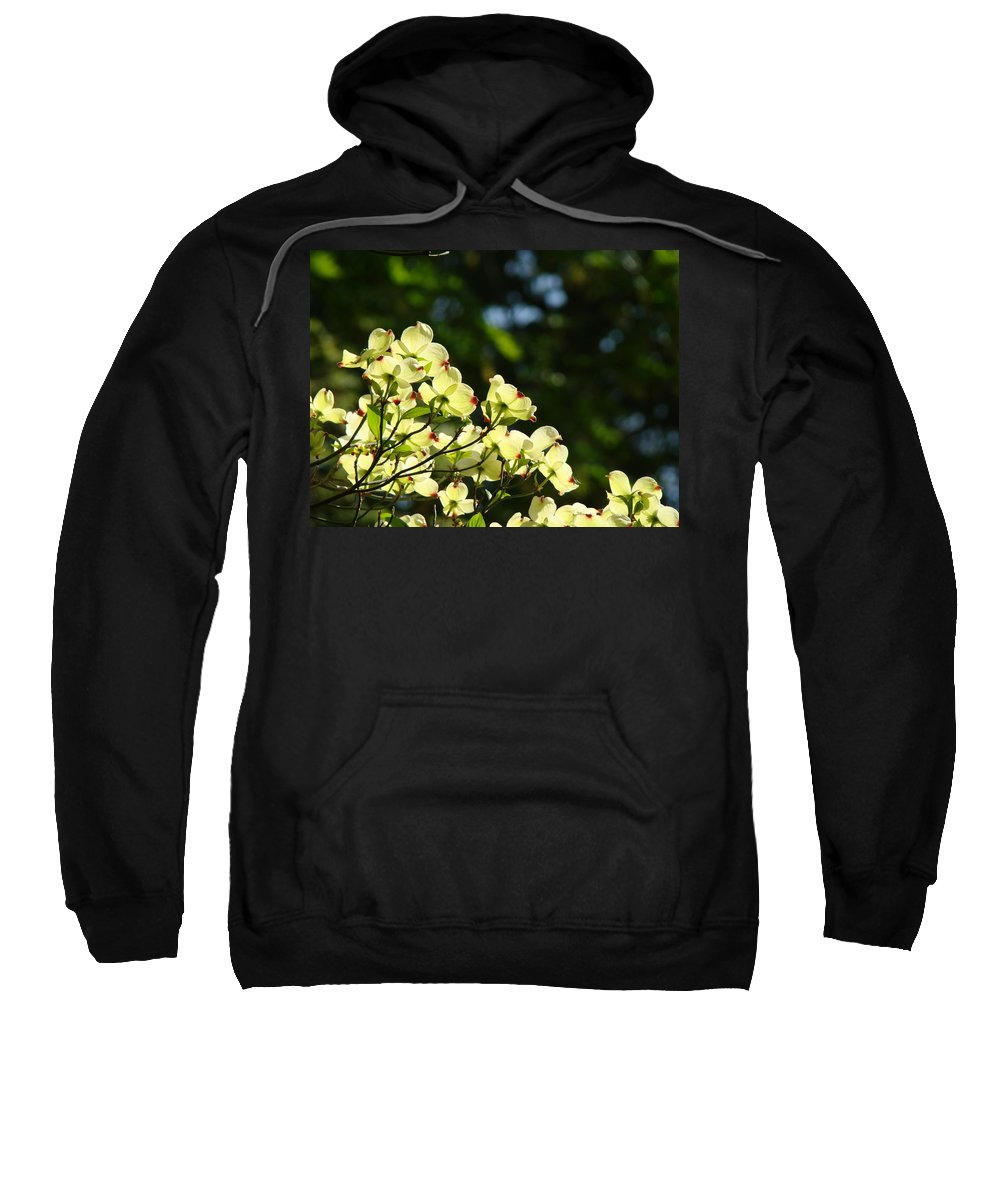 Dogwood Sweatshirt featuring the photograph Dogwood Flowers White Dogwood Tree Flowers Art Prints Cards Baslee Troutman by Baslee Troutman