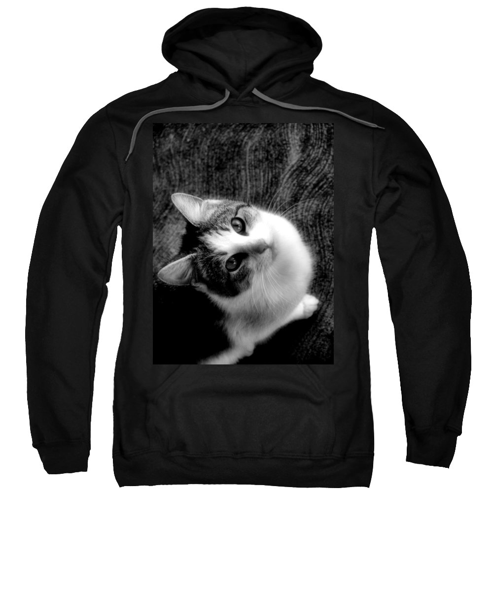 Cat Sweatshirt featuring the photograph Don't Ever Leave by Gaby Swanson