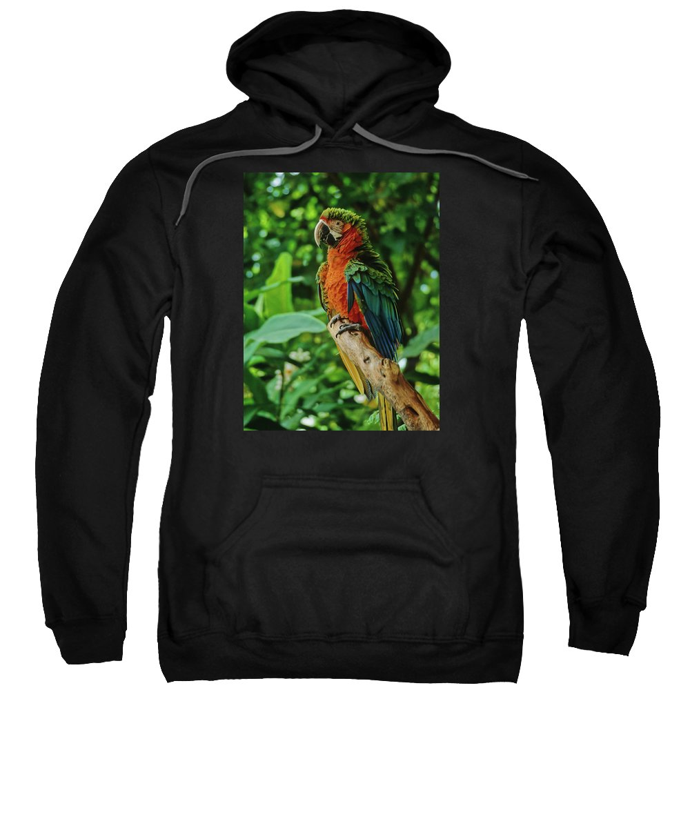 Parrot Sweatshirt featuring the photograph Don't Ruffle My Feathers by Marie Hicks