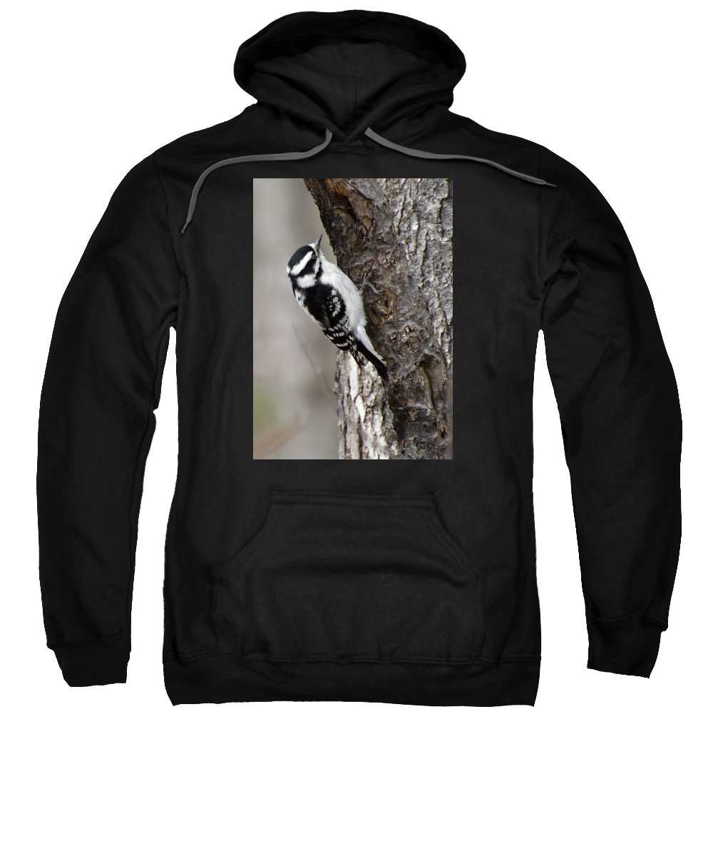 Sweatshirt featuring the photograph Downy 01 by Robert Hayes