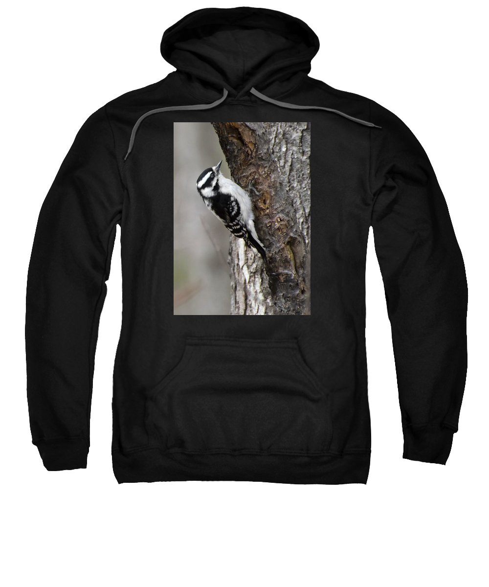Sweatshirt featuring the photograph Downy 02 by Robert Hayes