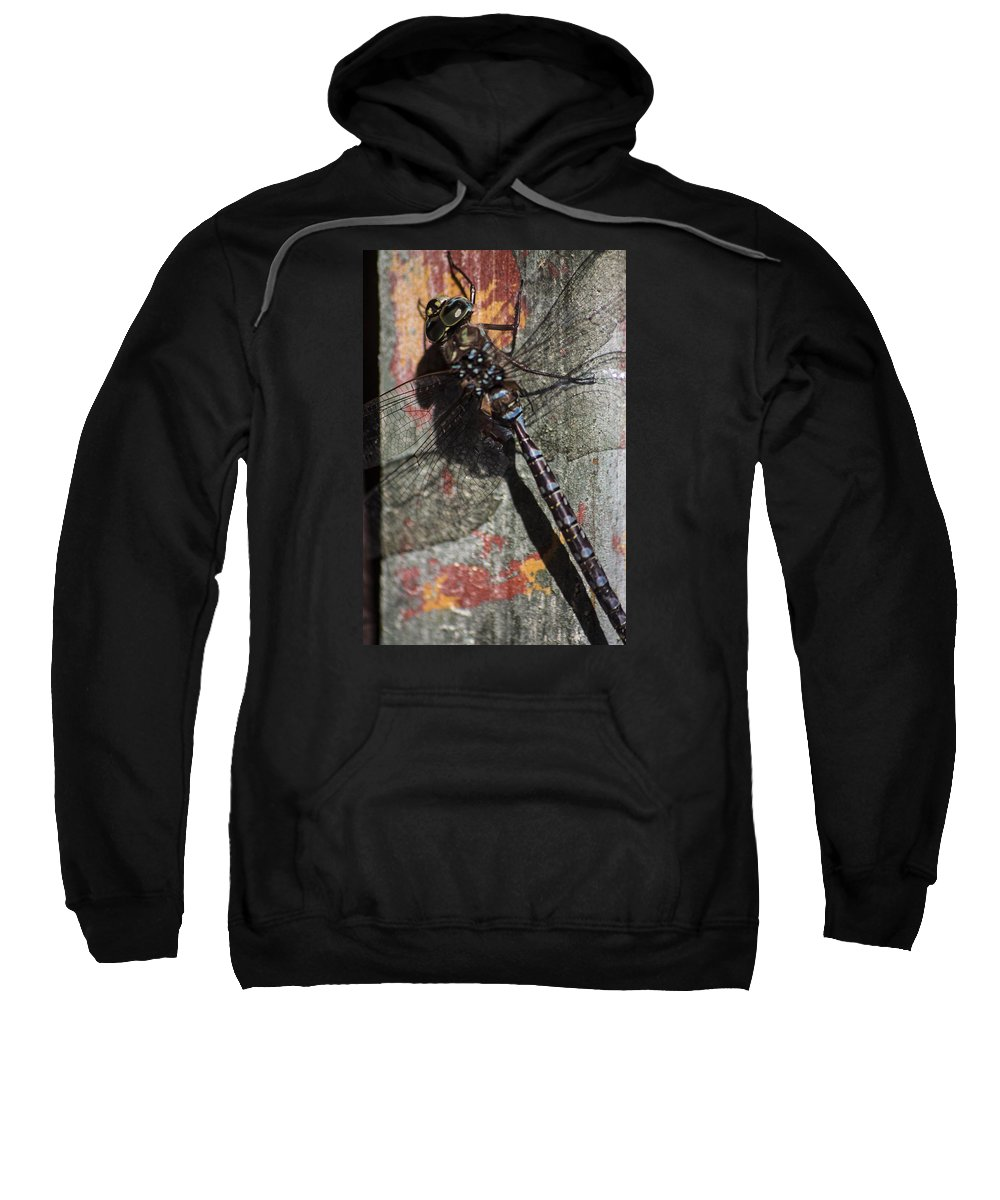 Insect Sweatshirt featuring the photograph Dragon Fly by Kenneth Brunell
