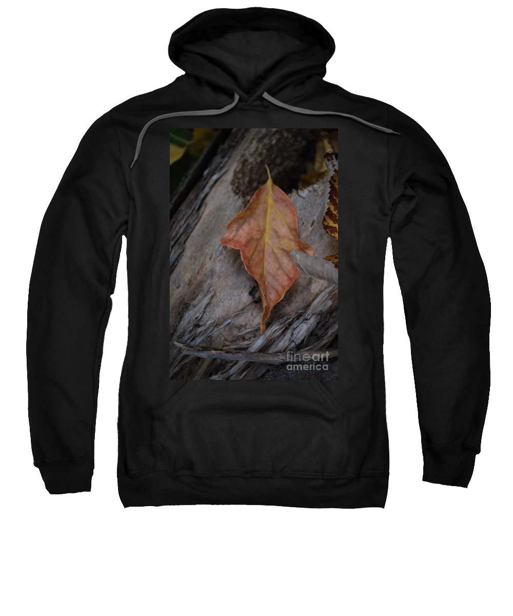 Fall Sweatshirt featuring the photograph Dried Leaf On Log by Heather Kirk