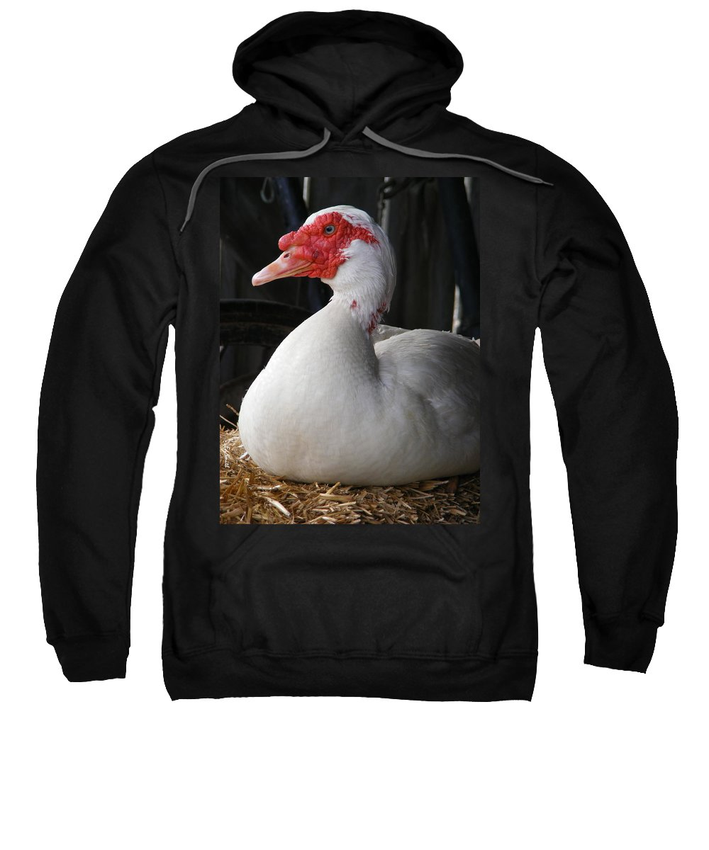 Duck Duck Goose Sweatshirt featuring the photograph Duck Duck Goose by Ed Smith