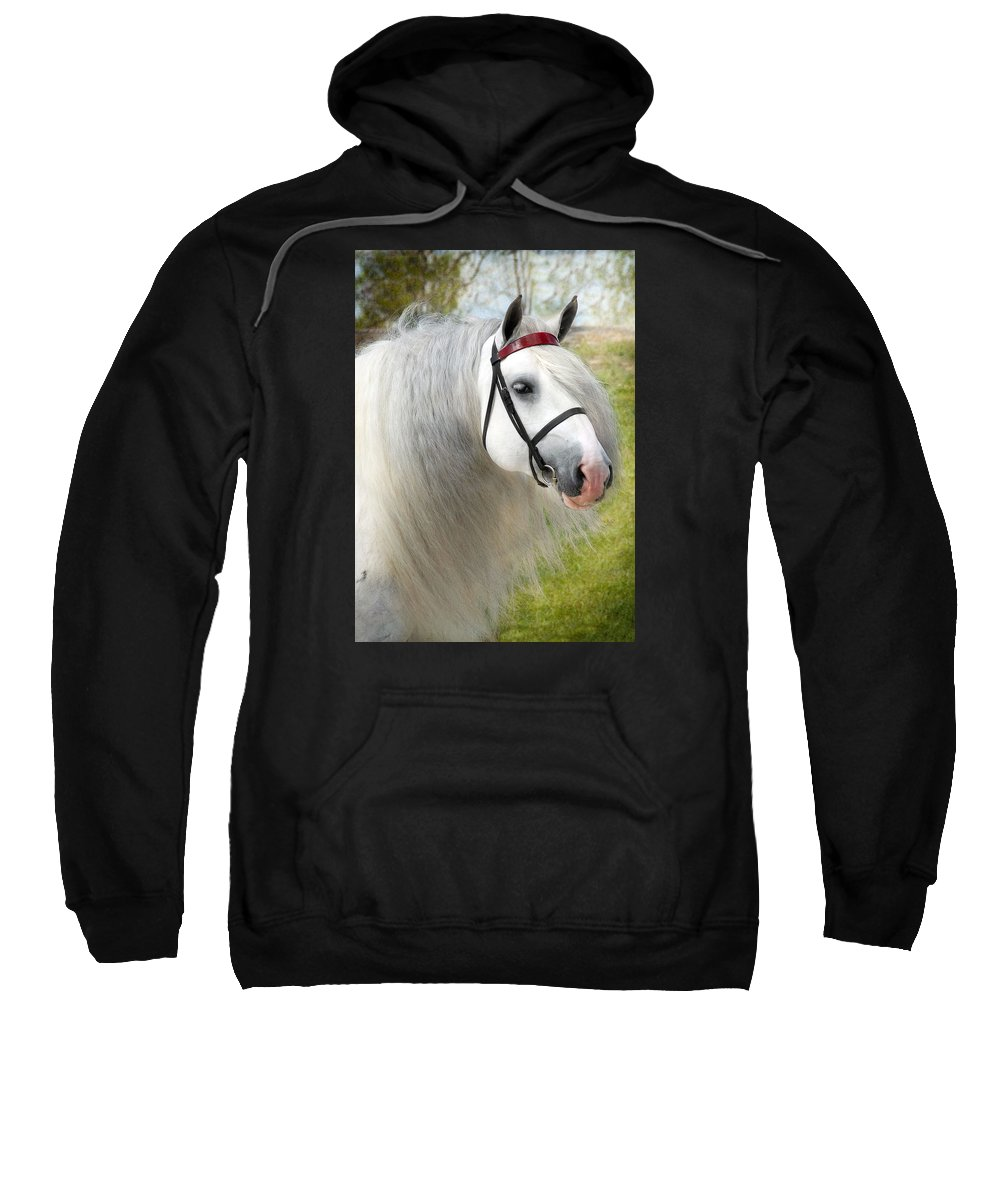 Horses Sweatshirt featuring the photograph Dunbrody by Fran J Scott
