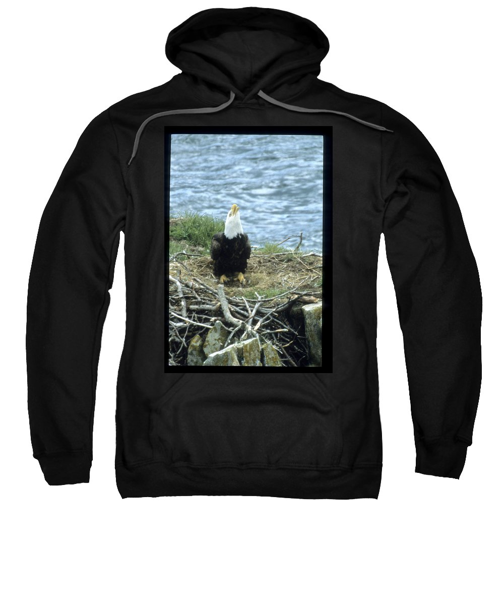 Wildlife Sweatshirt featuring the photograph Eagle Calls In Its Mate by Larry Allan