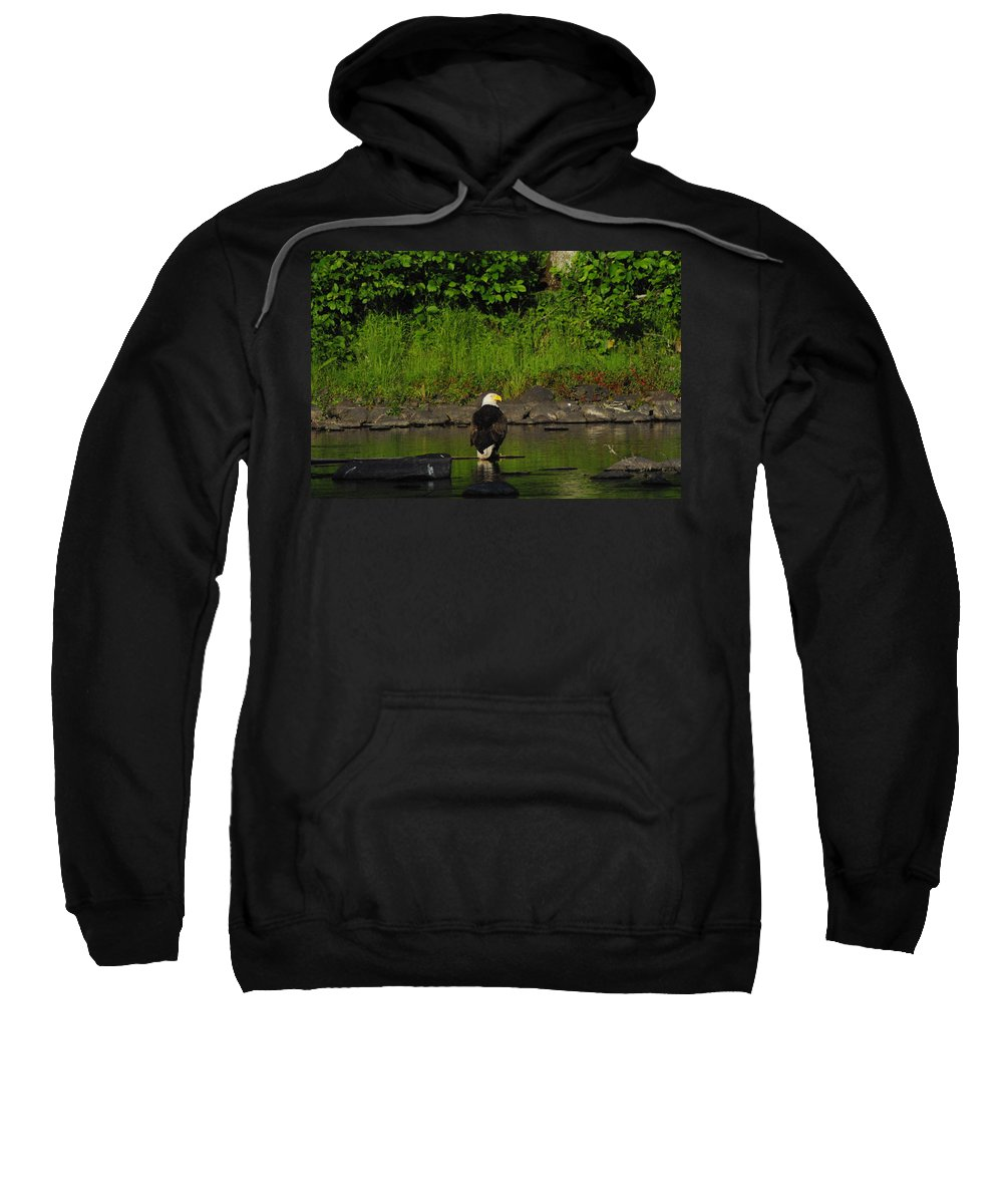 Eagle Sweatshirt featuring the photograph Eagle On River Rock II by Alice Markham