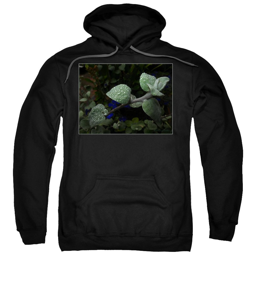 Dew Sweatshirt featuring the photograph Early Morning Water Droplets by Joyce Dickens