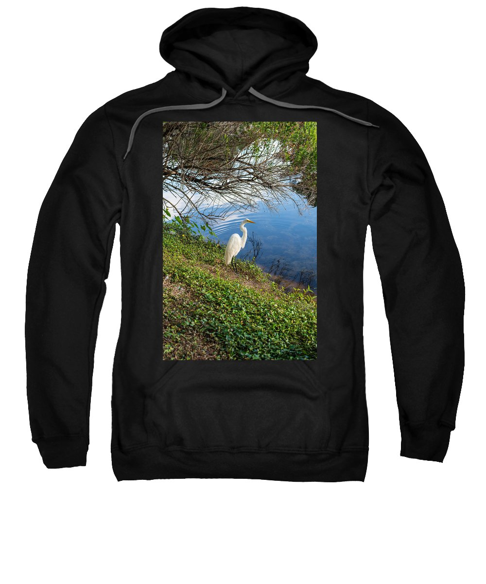 Egret Sweatshirt featuring the photograph Egret In Florida Color by Shane Seymour