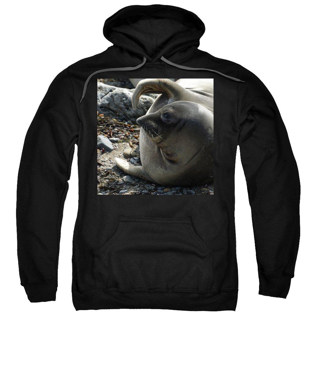 Elephant Seals Sweatshirt featuring the photograph Elephant Seal by Ernie Echols