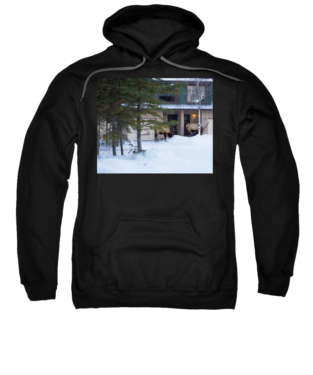 Elk Sweatshirt featuring the photograph Elk Come Calling by Jo-Anne Gazo-McKim