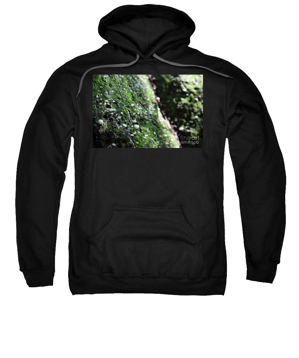 Rocks Sweatshirt featuring the photograph Embedded by Amanda Barcon