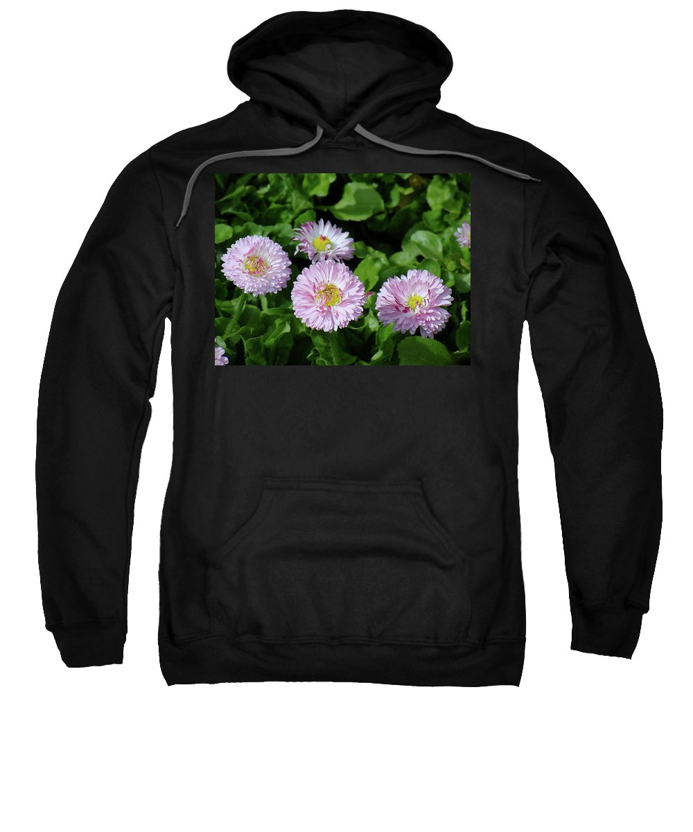 Flower Sweatshirt featuring the photograph English Daisies by Shirley Heyn