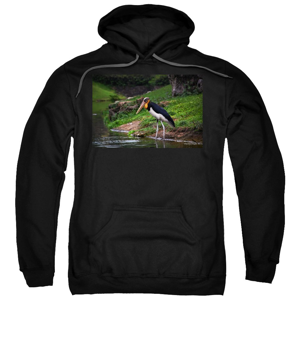 Bird Sweatshirt featuring the photograph Extreme Focus by Charuhas Images