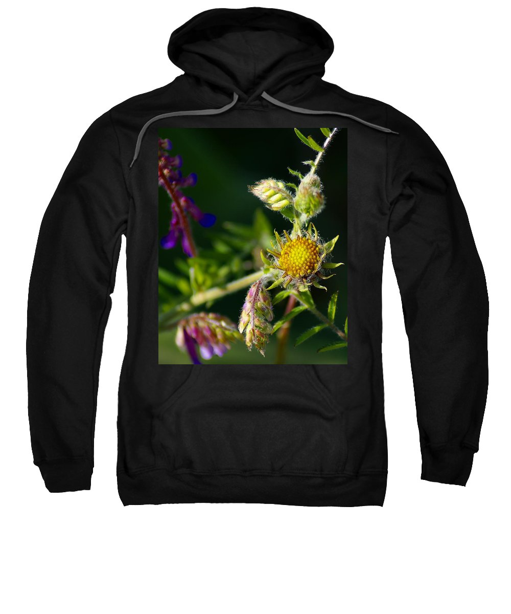 Flowers Sweatshirt featuring the photograph Eye Candy From The Garden by Ben Upham III