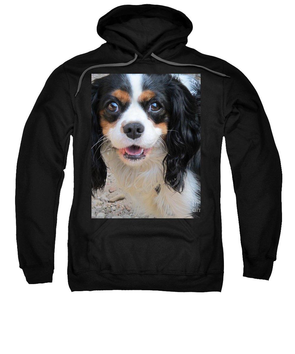 Animals Sweatshirt featuring the photograph Eyes Of Light by Valia Bradshaw