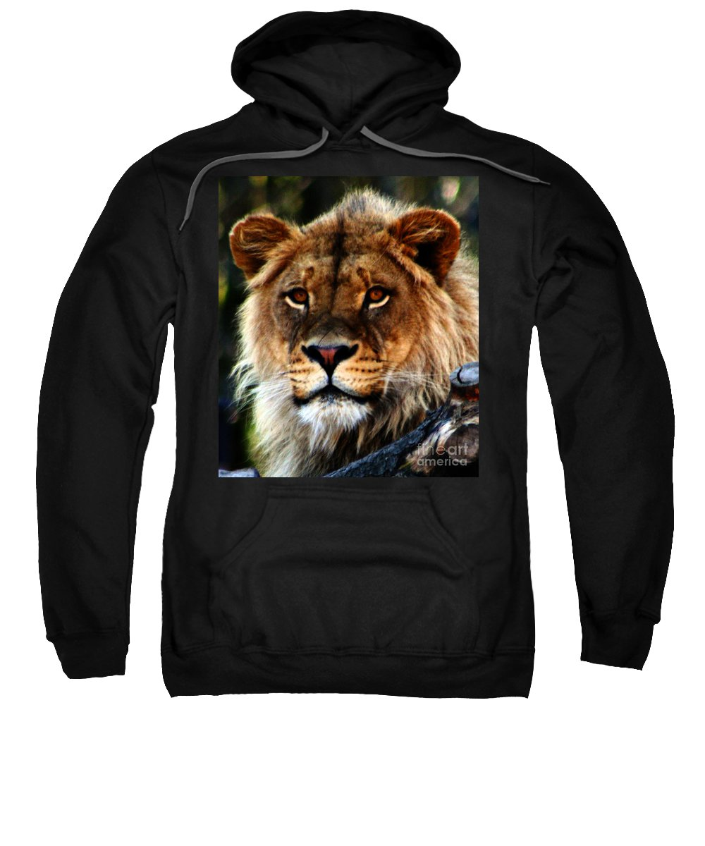 Lion Sweatshirt featuring the photograph Eyes Of The Young King by Nick Gustafson
