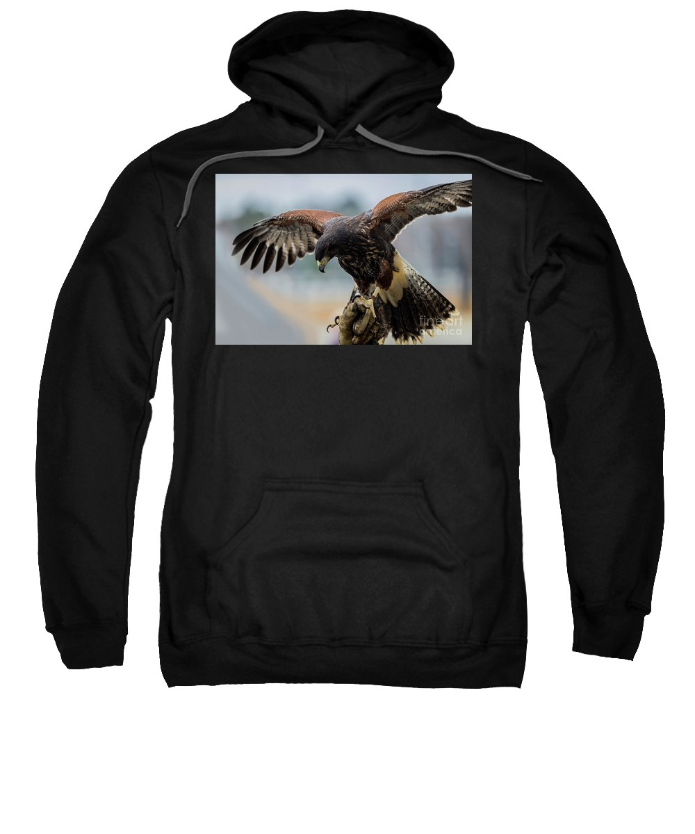 Falcon Sweatshirt featuring the photograph Falcon On Gloved Hand 5251 by Doug Berry