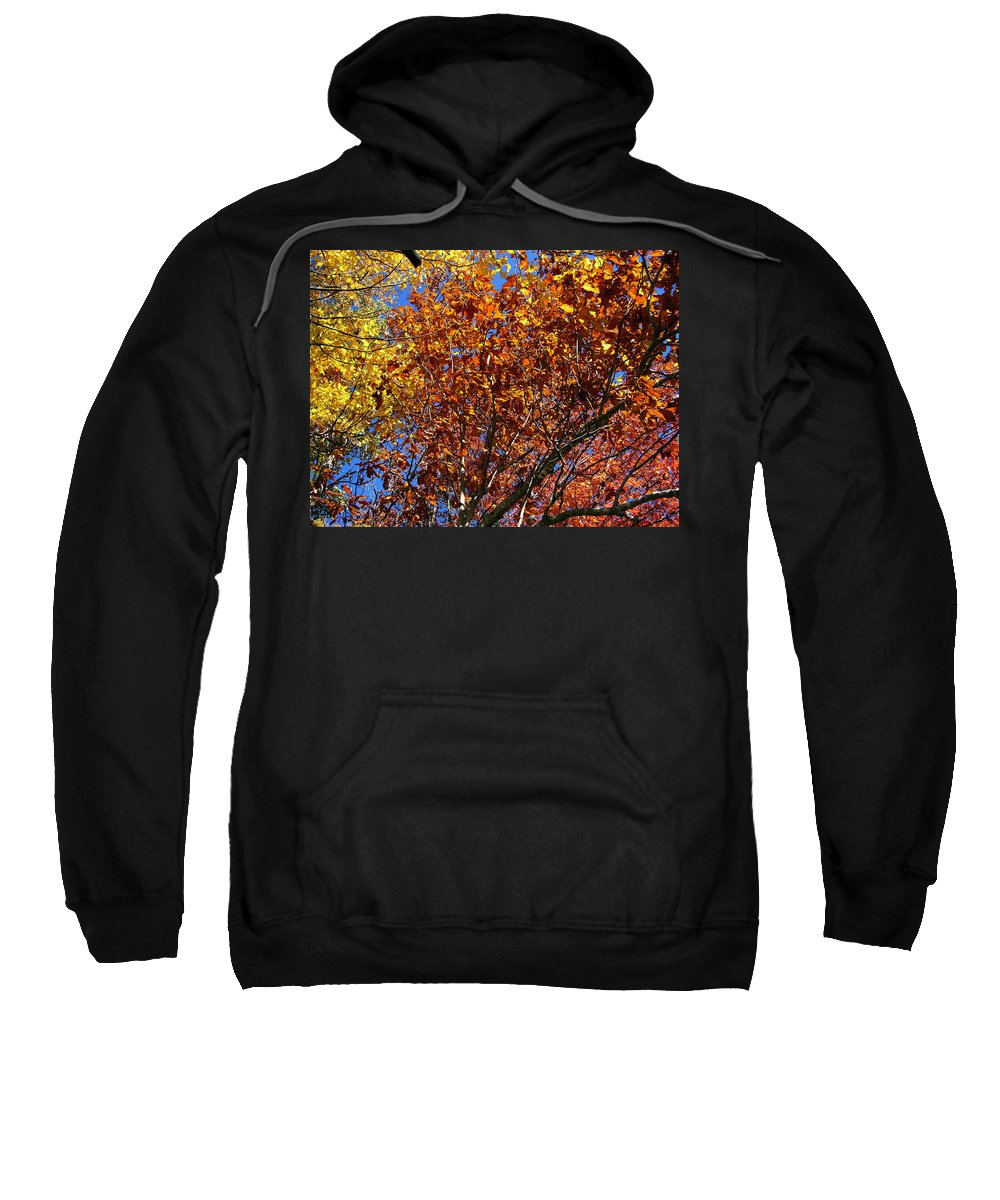 Fall Sweatshirt featuring the photograph Fall by Flavia Westerwelle