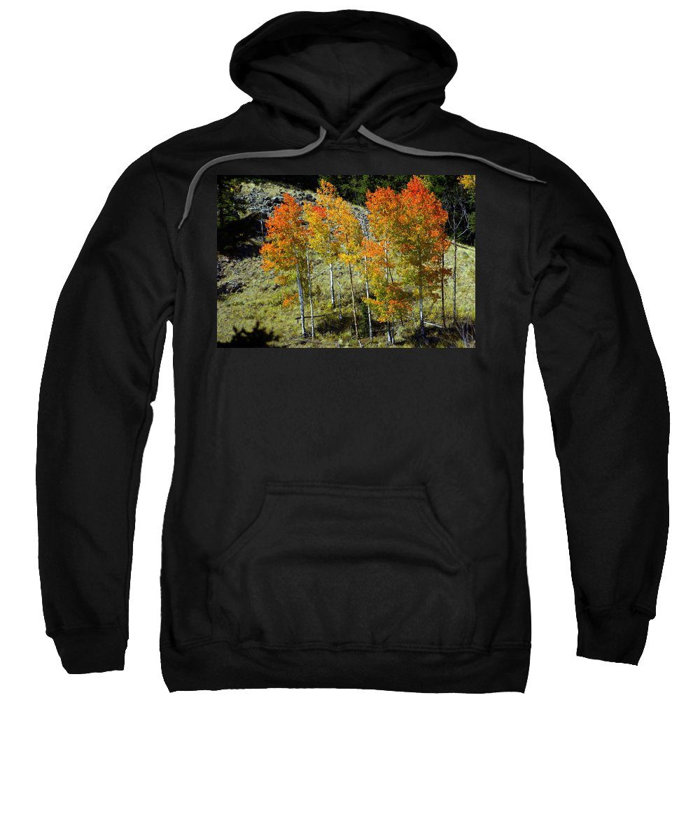 Sweatshirt featuring the photograph Fall In Colorado by Marty Koch