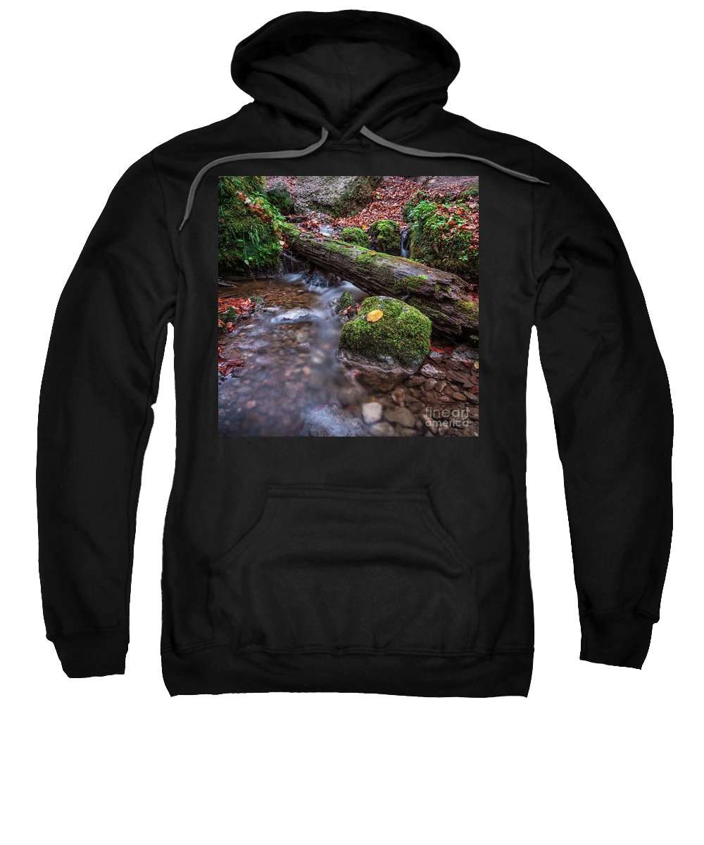 1x1 Sweatshirt featuring the photograph Fall In The Woods by Hannes Cmarits