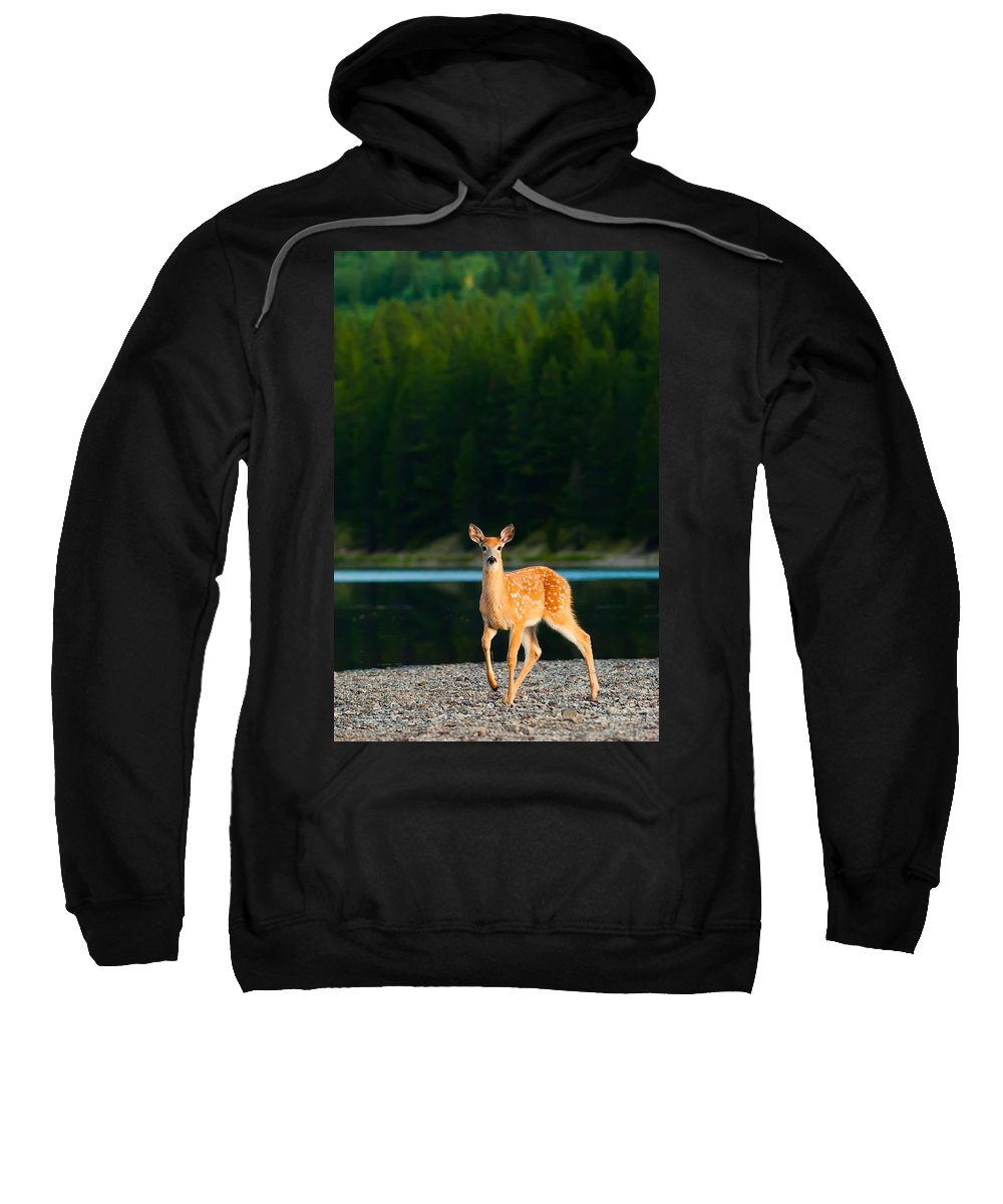 2006 Sweatshirt featuring the photograph Fawn by Sebastian Musial