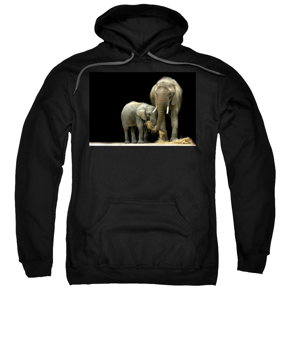 Elephant Sweatshirt featuring the photograph Feeding Time by Stephie Butler