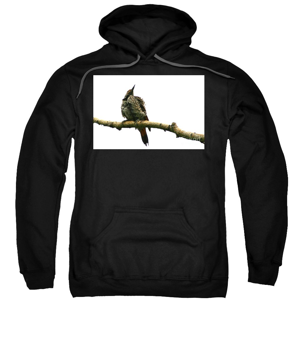 Alyce Taylor Sweatshirt featuring the photograph Female Flicker by Alyce Taylor