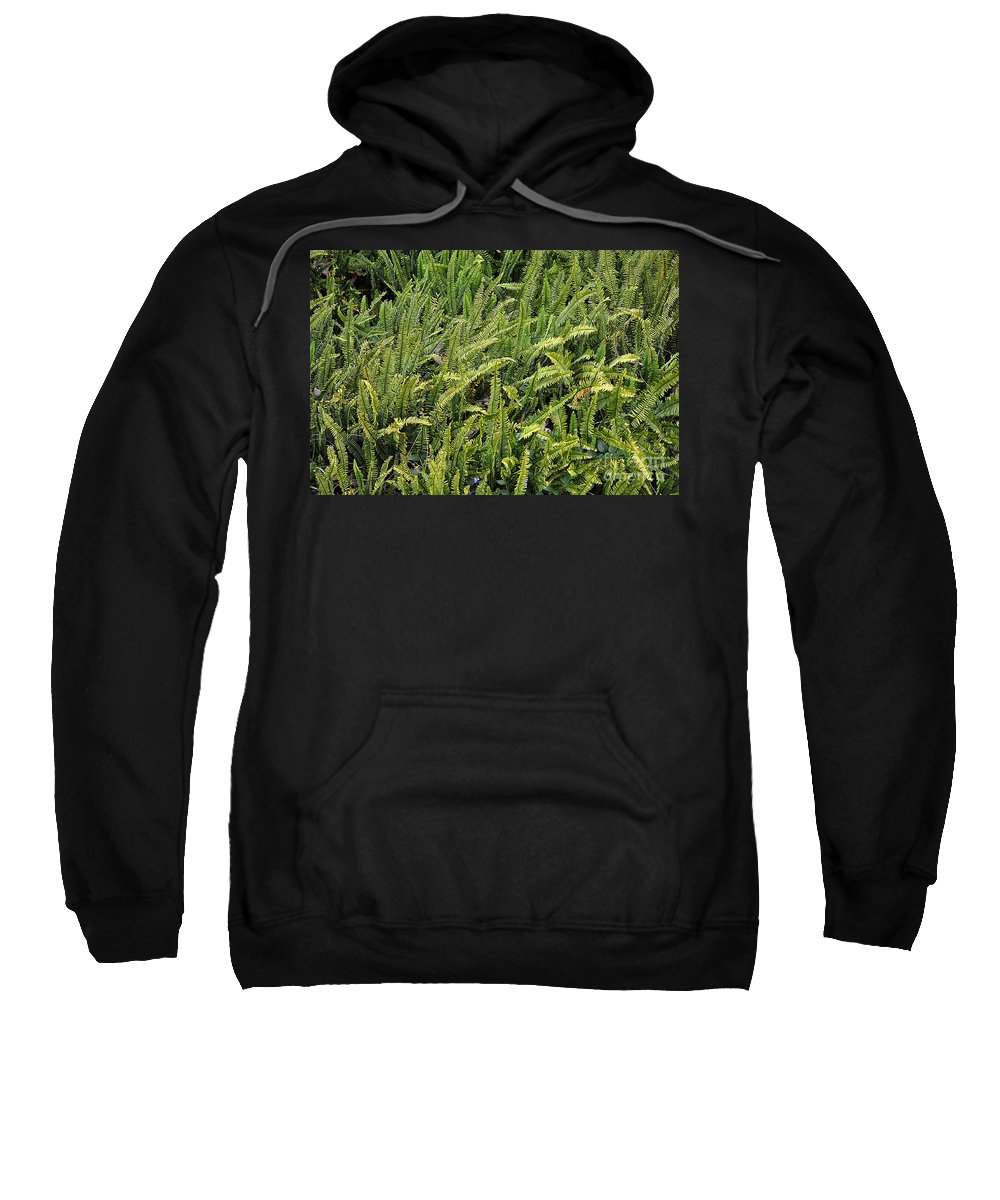 Clay Sweatshirt featuring the photograph Fern by Clayton Bruster
