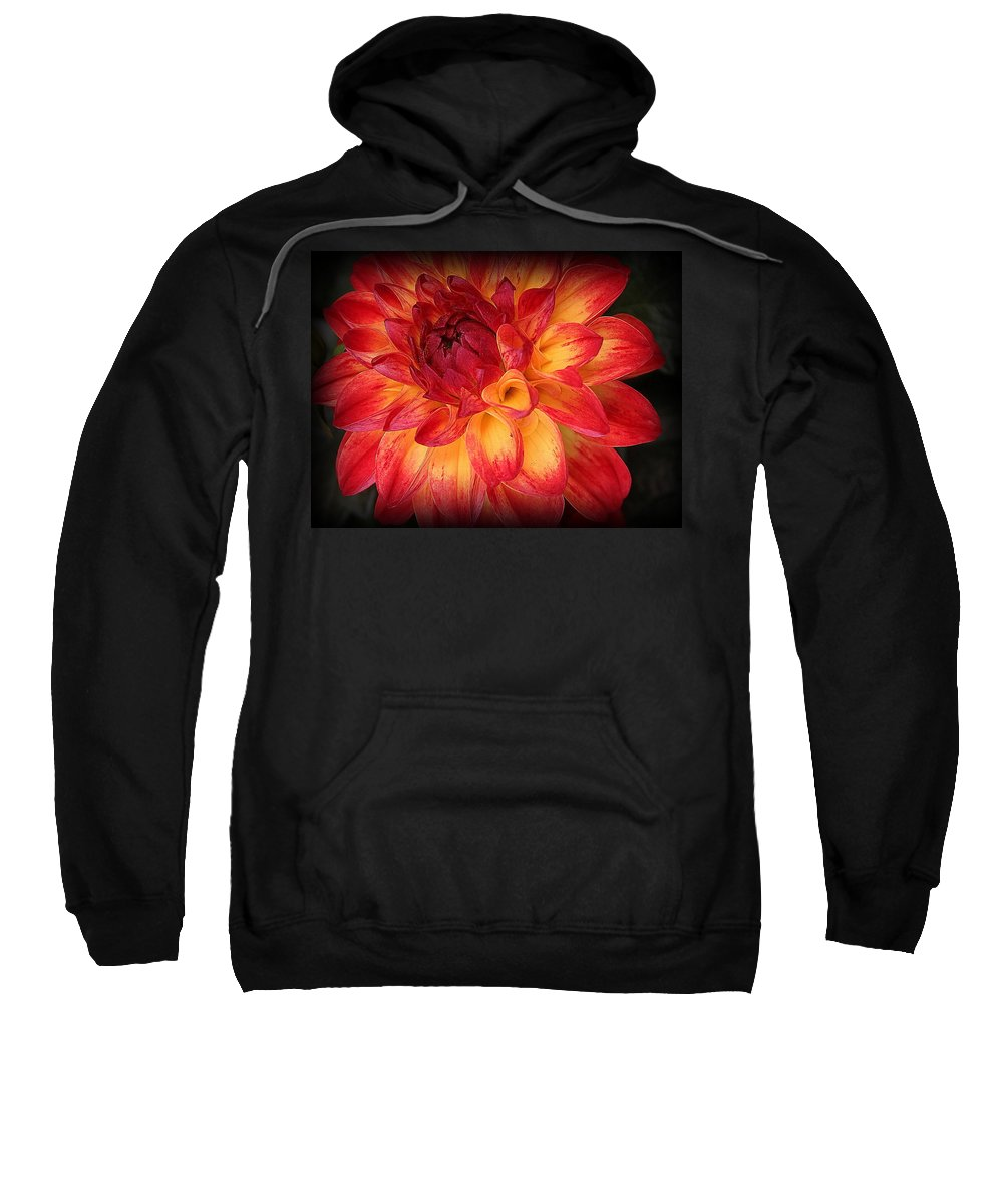 Makro Sweatshirt featuring the photograph Fiery Red And Yellow Dahlia by Dora Sofia Caputo Photographic Design and Fine Art