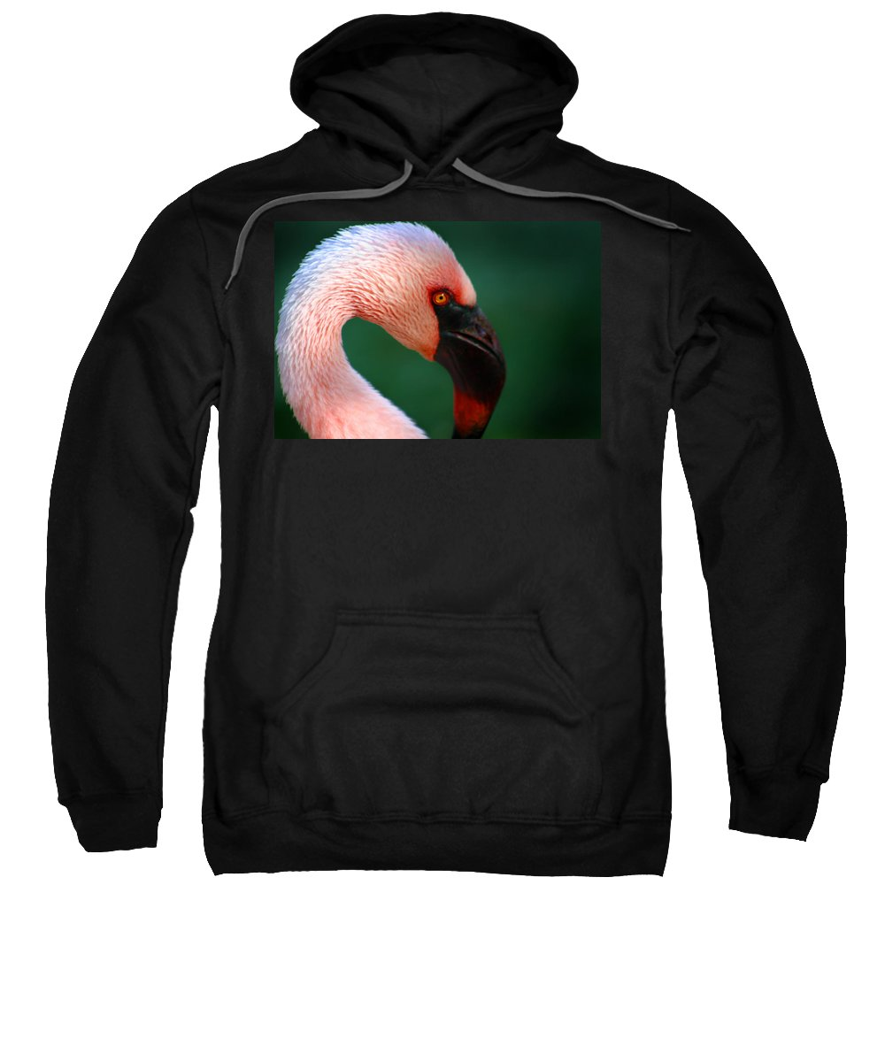 Flamingo Sweatshirt featuring the photograph Flamingo by Anthony Jones