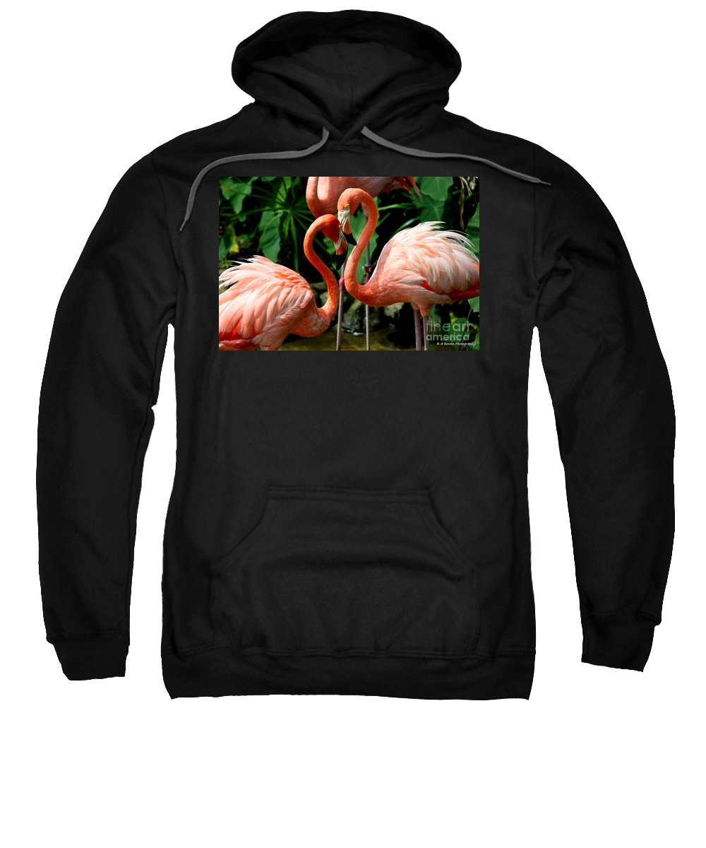 Pink Flamingo Sweatshirt featuring the photograph Flamingo Heart by Barbara Bowen