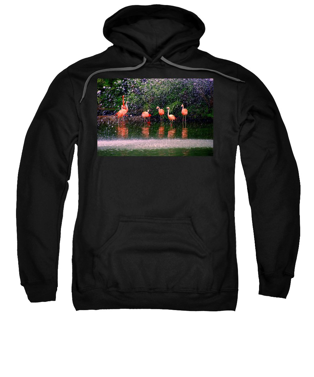 Flamingos Sweatshirt featuring the photograph Flamingos II by Susanne Van Hulst