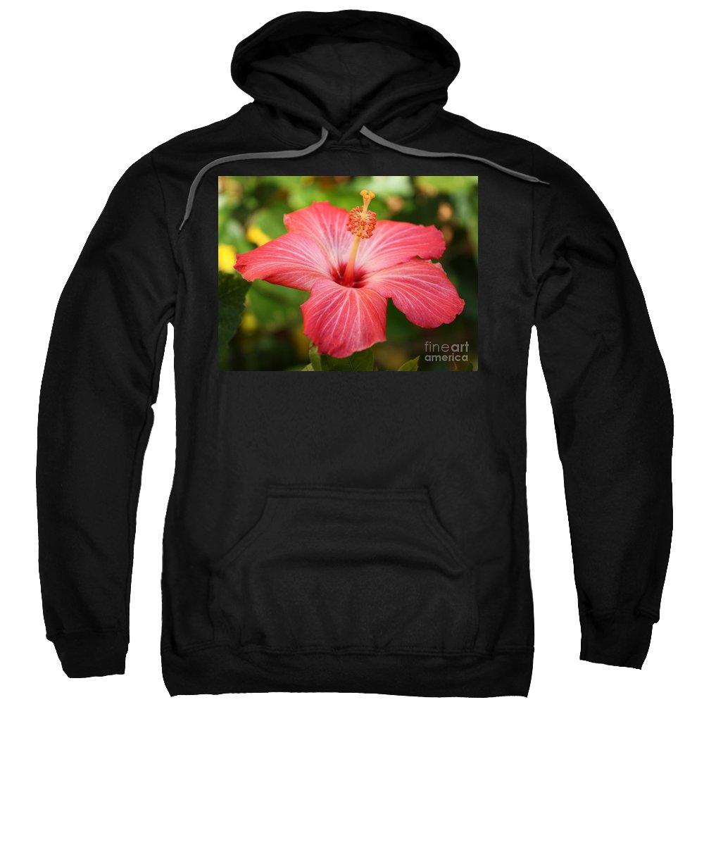 Pink Hibiscus Sweatshirt featuring the photograph Florida Hibiscus by Carol Groenen