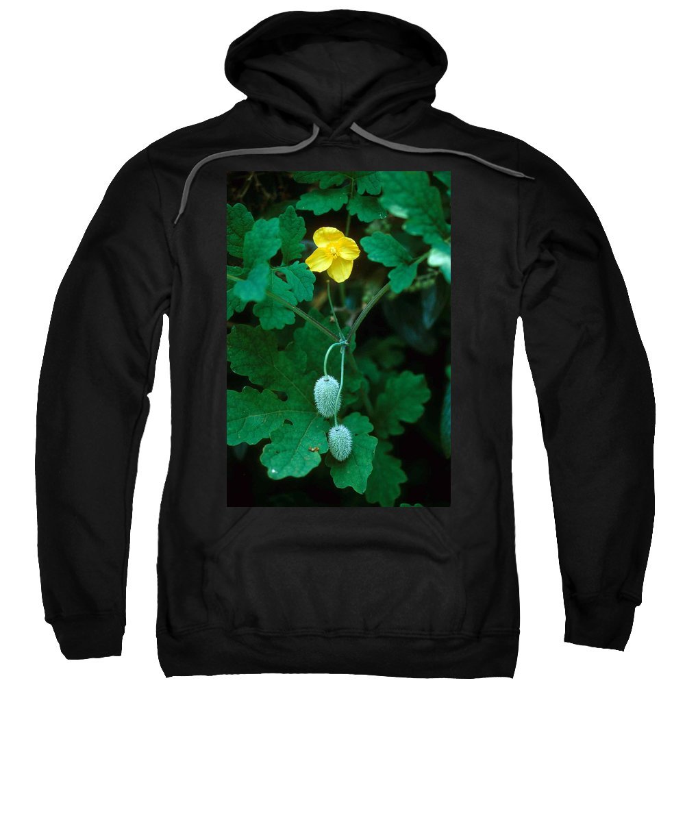 Flower Sweatshirt featuring the photograph Flower And Fruit by Laurie Paci